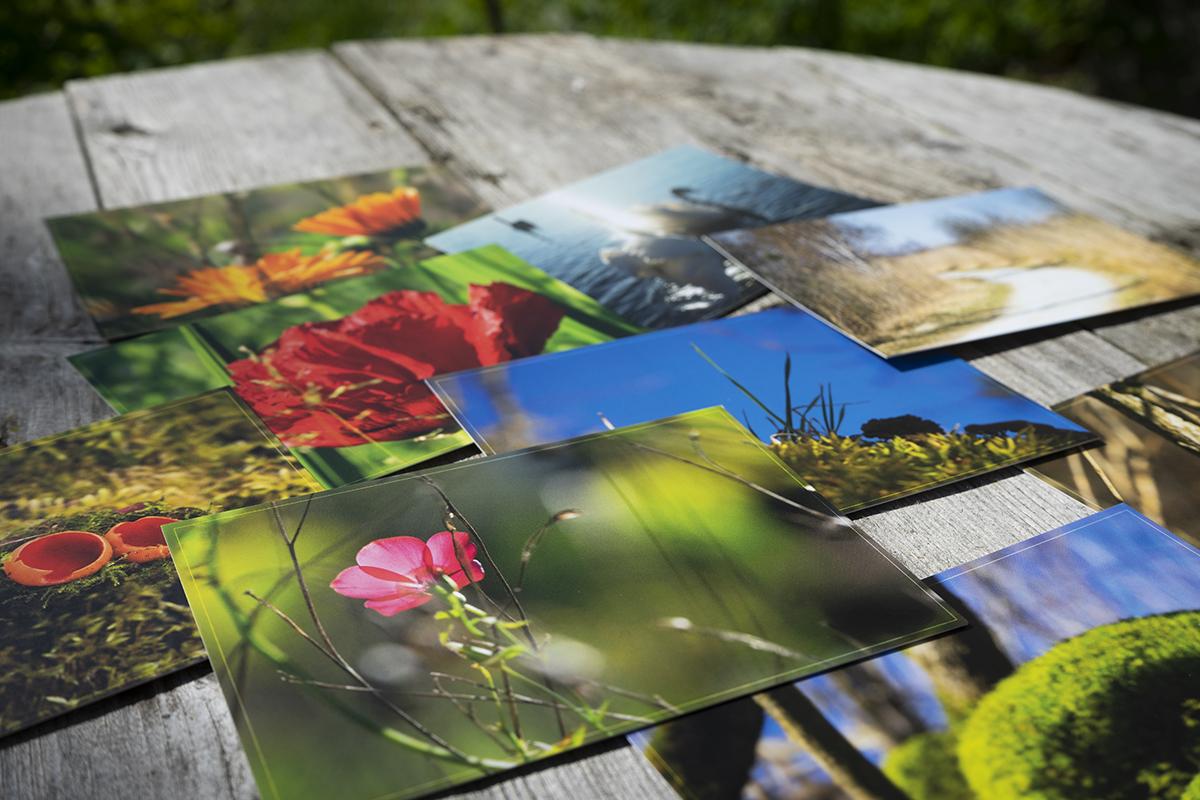 Postkarten Sabine Schmidt-Malaj